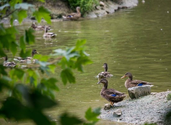 michigan_duck_sanctuary-29